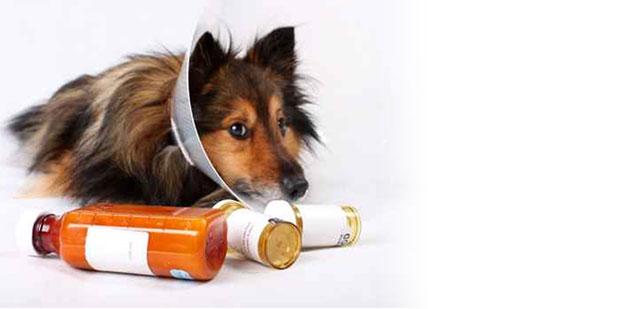 Society Of Veterinary Hospital Pharmacists